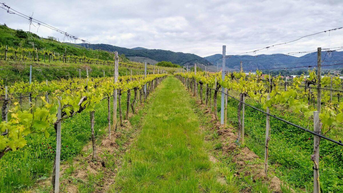 Im Porträt: Die Weinhofmeisterei