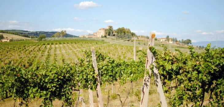 Weingärten von Tunia Wines